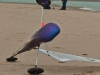 CharRCMerlimont2010-10-14-2.jpg